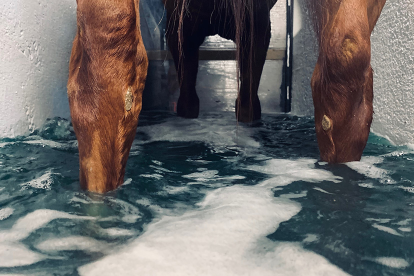 Complete Equine Performance - Cold Water Spa