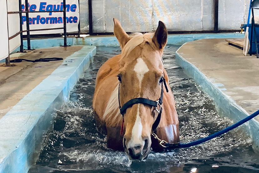 Complete Equine Performance - Swimming Pool
