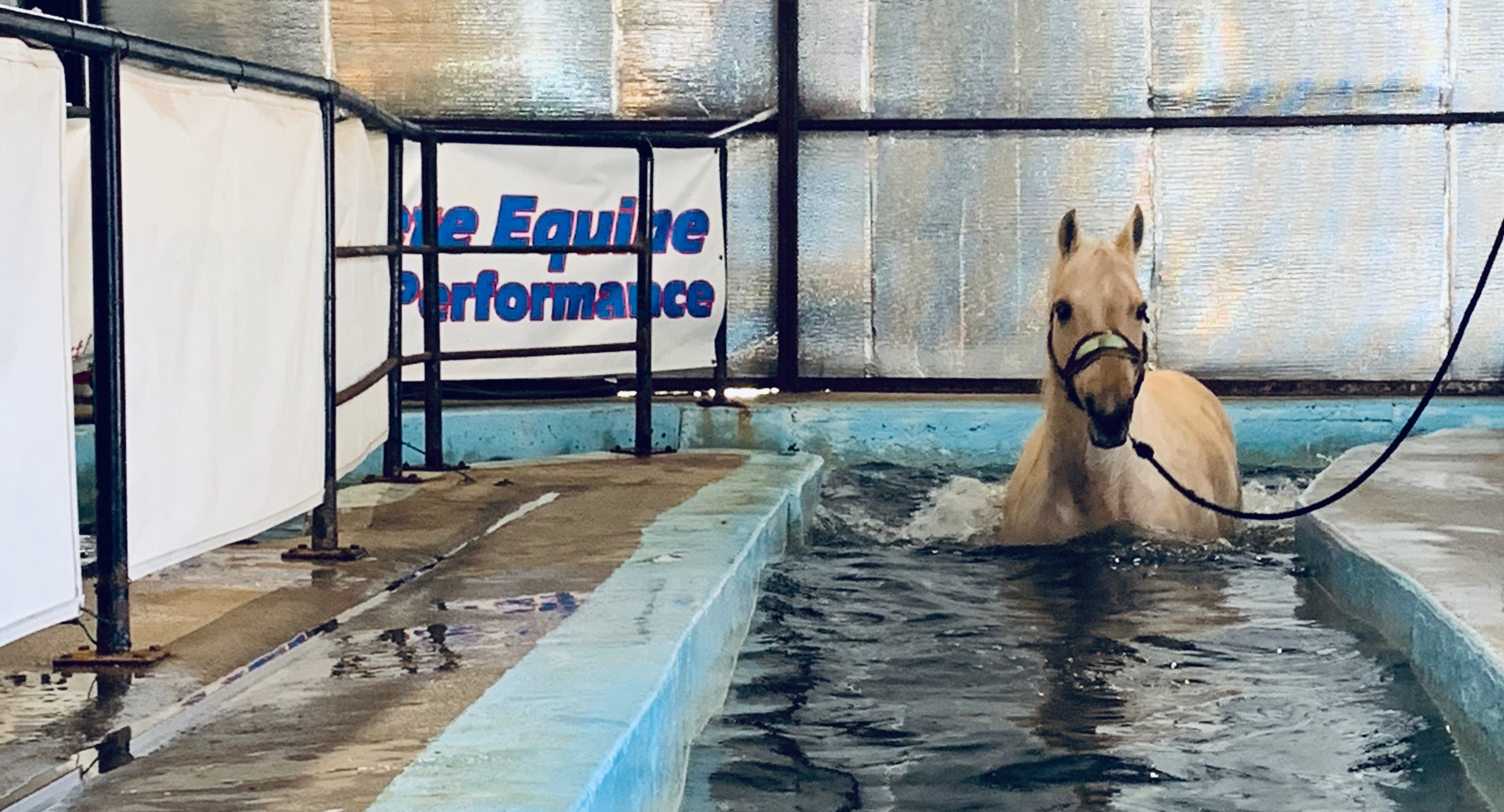 Complete Equine Performance