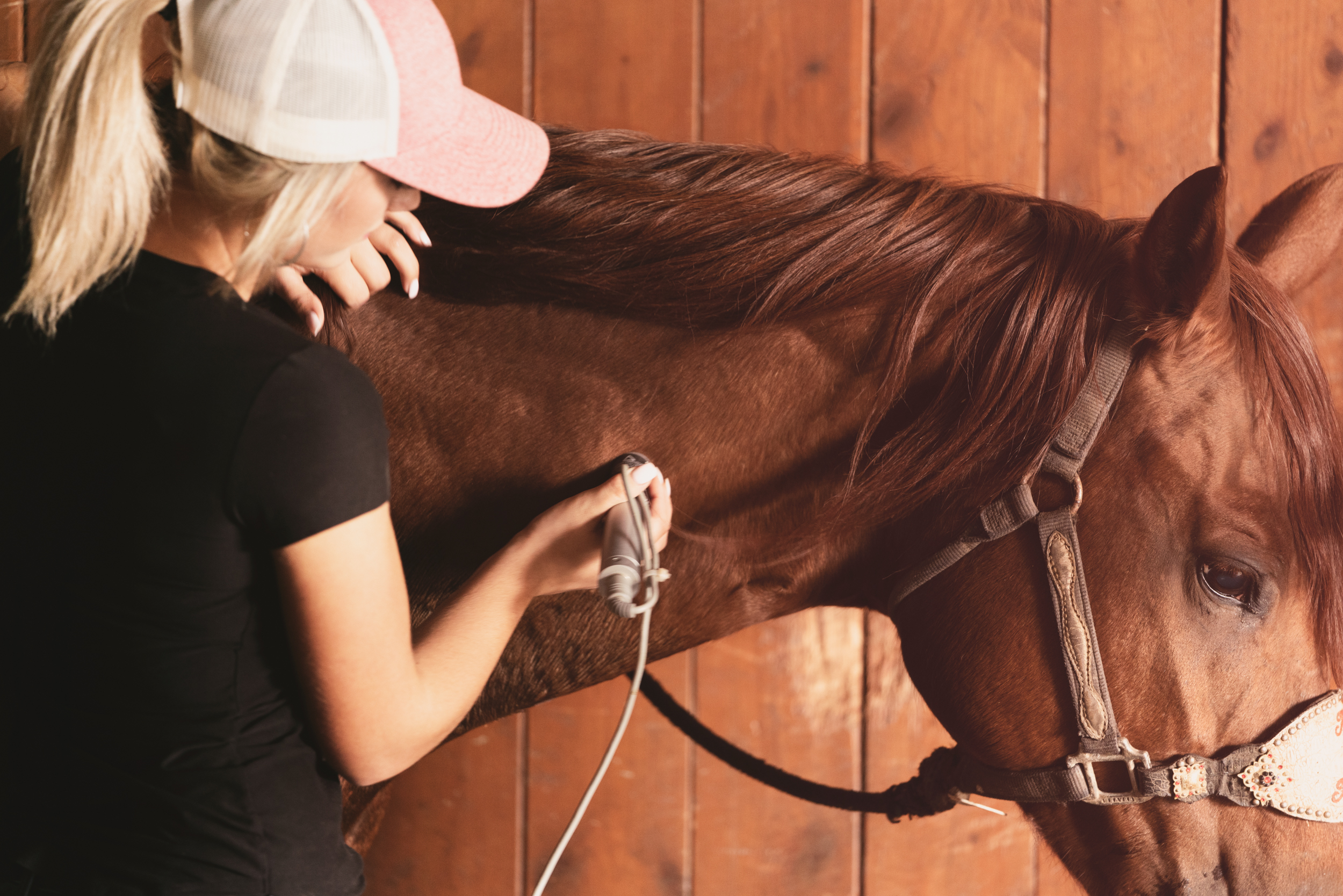 Complete Equine Performance - Laser Respond Systems